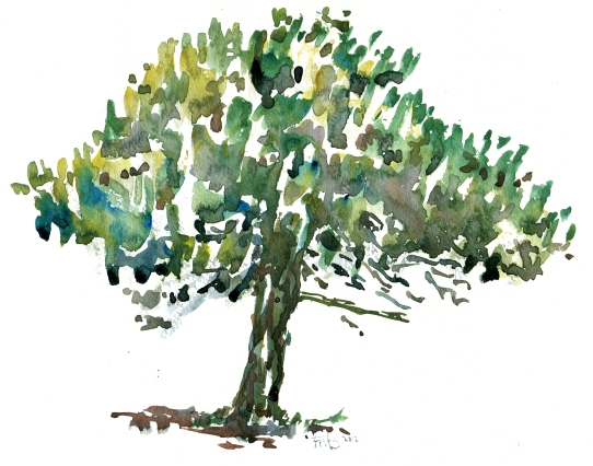tree, akvarel - Watercolor by Frits Ahlefeldt Bornholm Coast path