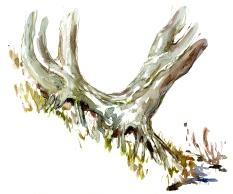 trees, akvarel - Watercolor by Frits Ahlefeldt Bornholm Coast path