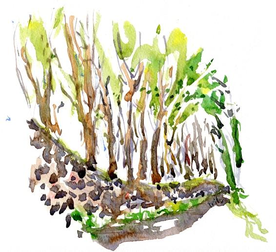 Forest, akvarel - Watercolor by Frits Ahlefeldt Bornholm Coast path