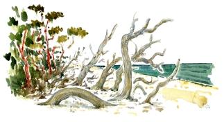 South beach, trees,