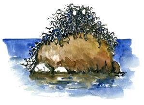 creatue, akvarel - Watercolor by Frits Ahlefeldt Bornholm Coast path