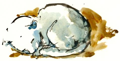 cat, akvarel - Watercolor by Frits Ahlefeldt Bornholm Coast path