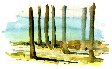 Sydkysten, kystskov - South coast, coastal forest.